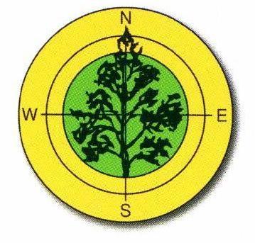 logo_breza.jpg