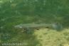 Река Врело и стећци у Перућцу (5)