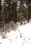 Sneg na Tari obradovao mališane (2)