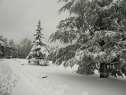 Oko 20 santimetara snega na Tari (1)