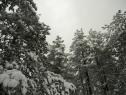 Oko 20 santimetara snega na Tari (3)